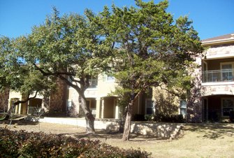 Austin TX Tree Services